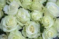 Många en vit rosa closeup för försiktig blomma royaltyfria bilder