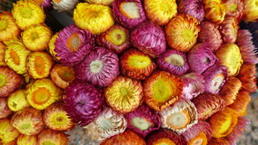 Många färger av härliga blommor, bakgrund Arkivbilder