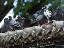 Många fåglar Royaltyfri Bild