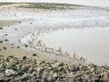 Många fåglar Fotografering för Bildbyråer