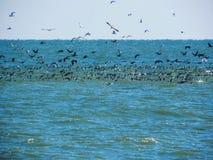 Många fåglar fångar fisken arkivbilder
