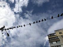 Många fåglar som i rad sitter på telefontrådar och telefonlinjer arkivbild