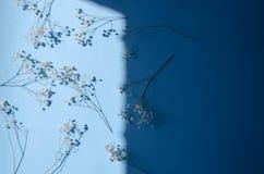 Många filialer av gypsophilaen på en blå bakgrund med ett hårt ljus arkivfoton