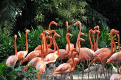 Många flamingo Royaltyfri Fotografi
