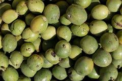 Många gör grön grekiska valnötter gröna muttrar i en ask Textur av grön grekisk tokig bakgrund Arkivfoto