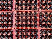 Många gör till kok eller dencola flaskan i plast- spjällådor för levererat till kunder royaltyfria bilder