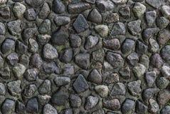 Många grå färgstenar förbindelse av täckt cement som reds ut med den gröna formen, den gamla väggen, red ut bakgrund Royaltyfria Bilder