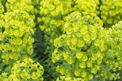 Många gröna växter i blom Arkivfoton