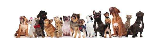 Många gulliga husdjur som ser upp royaltyfria foton