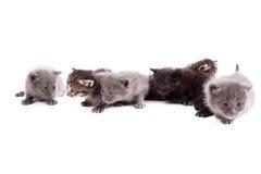 Många gulliga kattungar som isoleras på vit Royaltyfri Foto