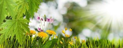 Många härliga blommor i trädgården royaltyfri bild