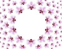 Många härliga nya blommor av den purpurfärgade orkidén Royaltyfri Fotografi