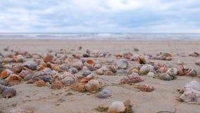 Många härliga skal av rapan i sanden på vågorna för Black Sea kusthav stock video
