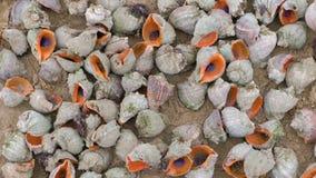 Många härliga skal av rapan på sanden på sikten för Black Sea kustnärbild lager videofilmer