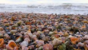Många härliga skal av rapan på sanden på sikten för Black Sea kustnärbild med havsvågor stock video