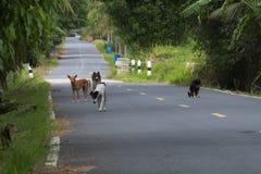 Många hemlös hundkapplöpning på vägen arkivfoton
