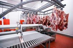 Många huggit av rått kött som hänger och att ordna i rad klart för att bearbeta process i en köttfabrik den konstnärliga detaljer royaltyfri foto