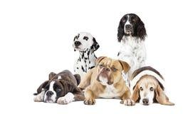 Många hundkapplöpning som ut klipps royaltyfri bild