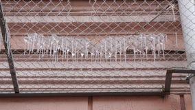 Många istappar på ett säkerhetsraster av fasaden av byggnad royaltyfri bild