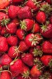 många jordgubbar Royaltyfri Bild