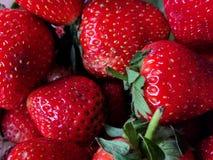 Många jordgubbe, slut upp Royaltyfri Bild