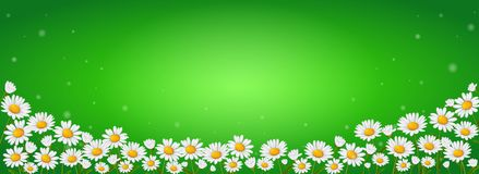 Många kamomillblommor på en grön bakgrund royaltyfri illustrationer