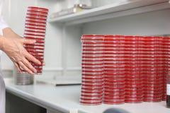 Många koppar av petra är på tabellen i ett medicinskt laboratorium, närbild Royaltyfri Foto