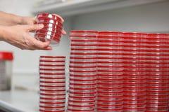 Många koppar av petra är på tabellen i ett medicinskt laboratorium, närbild Arkivfoto