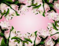 många lilja pink arkivfoto