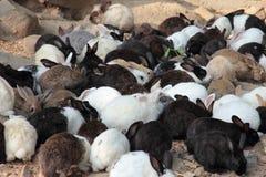 Många lilla kaniner Arkivfoto