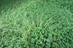 Många liten växtbakgrund Arkivbild