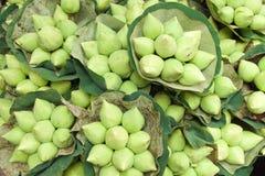 Många lotusblomma på jordningen Fotografering för Bildbyråer