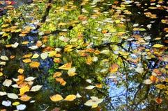 Många mång--färgade stupade sidor i vattnet Autumn Creek Arkivfoto