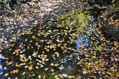 Många mång--färgade stupade sidor i vattnet Autumn Creek Arkivfoton