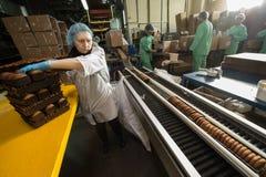 Många massiv produktion för söt kakamatfabrik Royaltyfri Bild