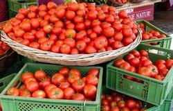 Många mogna röda runda tomater i korg och askar, på försäljning i sommar royaltyfri foto