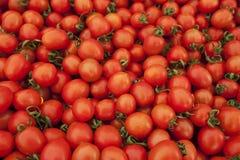 Många mogna röda tomater Arkivbild