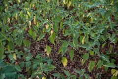 Många nässla för skoggräsplan Arkivfoton