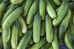 Många nya gröna organiska gurkor Fotografering för Bildbyråer