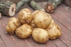Många nya potatisar på den bruna träasken royaltyfri bild