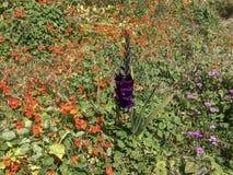 Många olika blommor royaltyfria foton
