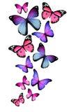 Många olika fjärilar på vitbakgrund stock illustrationer