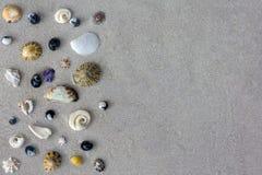 Många olika snäckskal av det Tasman havet på sandbakgrund Royaltyfri Bild