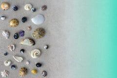 Många olika snäckskal av det Tasman havet på sandbakgrund eller textur Royaltyfri Foto