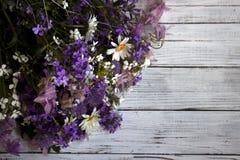 Många olika typer av blommor: purpurfärgad och violett flox, whiteMany olika typer av blommor: purpurfärgad och violett flox, vit Royaltyfri Bild