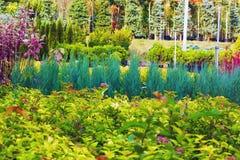 Många olika växter och träd i krukor på den trädgårds- mitten royaltyfria bilder