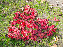 Många ordnar den röda blomman som hjärtaform royaltyfria foton