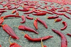 Många peppar för röd chili som torkar på jordningen Arkivfoto