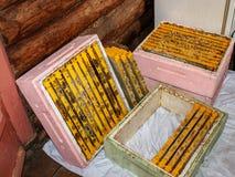 Många plast-ramar för honungskakor mycket av honung Plast- ramar ligger i lagerfall av bikupor som göras av den utvidgade polysty royaltyfria foton
