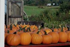 Många pumpor som är till salu på lantgården, står i Maine arkivbild